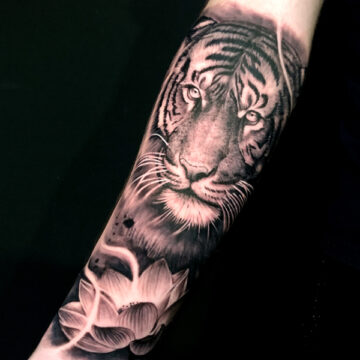 Tigre 20×20